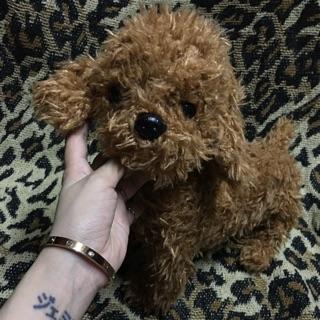 Chó Poodle bông giống thật 😂