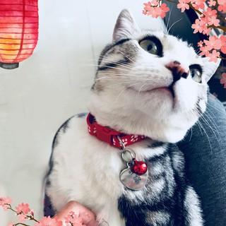 [Mã 267FMCGSALE giảm 8% đơn 500K] Vòng cổ cho mèo, vòng cổ lục lạc siêu xinh 12 màu giá rẻ nhất quả đất