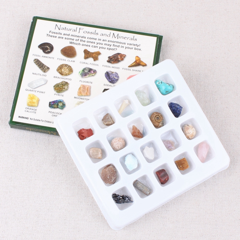 20pcs Mineral & Rock Samples Educational Geology Science Rock Collection Set