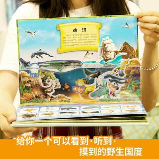 sách 3d hình thế giới động vật