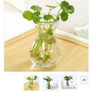 [ COMBO ] 10 Bình thuỷ tinh miệng loe đựng nước ép trang trí trồng cây dễ vệ sinh [ RẺ VÔ ĐỊCH ] thumbnail