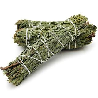 Yêu ThíchTuyết Tùng (Cedar) – Set 03 bó 10-12 cm
