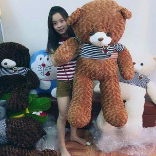 Teddy chuẩn 1m ( ảnh chụp thật )