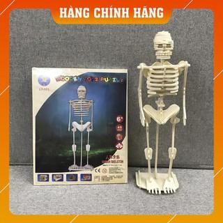 [Free Ship – Hàng Chính Hãng] Mô hình Skeleton Bộ xương người để trẻ tự học STEM