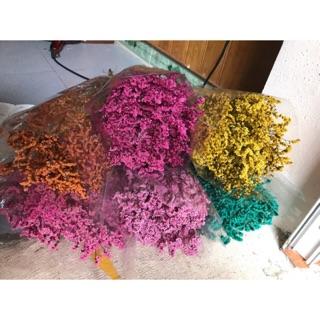 Hoa sao khô đủ mầu