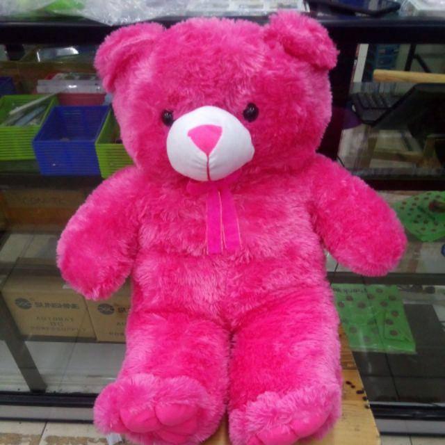 Gấu bông teddy jumbo cao 80cm