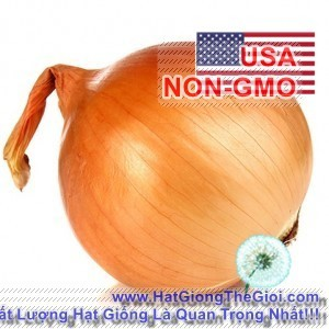 1g Hạt Giống Hành Củ Vàng - Texas Grano (Allium cepa) - 3493057 , 833256405 , 322_833256405 , 11000 , 1g-Hat-Giong-Hanh-Cu-Vang-Texas-Grano-Allium-cepa-322_833256405 , shopee.vn , 1g Hạt Giống Hành Củ Vàng - Texas Grano (Allium cepa)