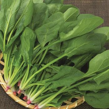 Hat giống rau cải bó xôi rau chân vit (300 hạt)