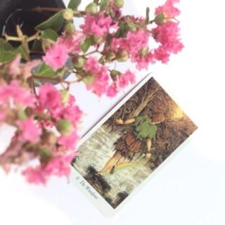 Bài Tarot Wild Wood
