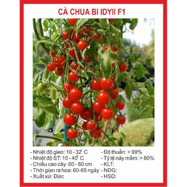 Hạt giống Cà Chua Bi Chùm 30 Hạt