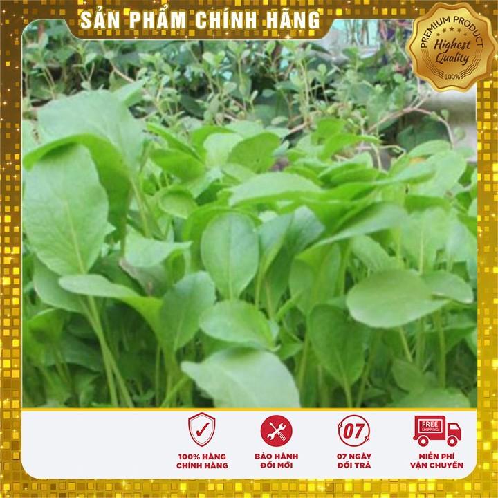 DEAL SỐC Hạt giông Rau Cải Ngọt thùng xôp dễ trồng (gói lẻ )
