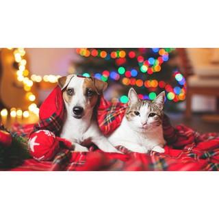 Bộ quà tặng đến từ Garé Pet Shop thumbnail