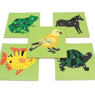Bộ ghép gỗ giáo cục sinh học Montessori 8 mẫu