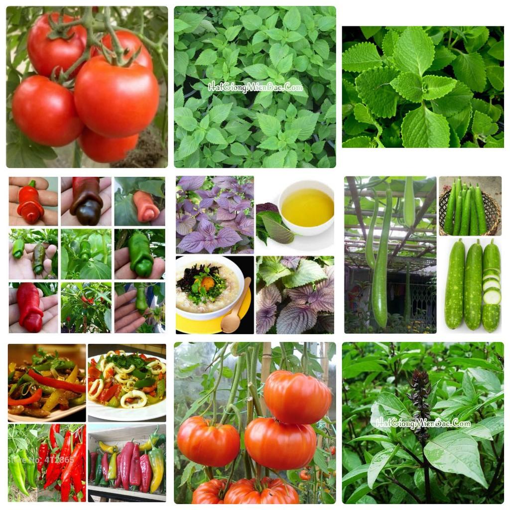 COMBO hạt giống rau ngon dễ trồng Lucky