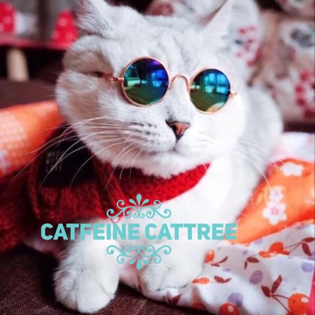 [FREESHIP 99K TOÀN QUỐC] Mắt kiếng cho mèo