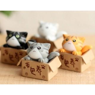 phụ kiện Mèo trong hộp