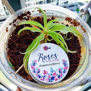 [Nước hoa khô Kidi]-Tôi có bạn với cỏ cây. Tặng nước hoa mini hoặc trà hoa mix