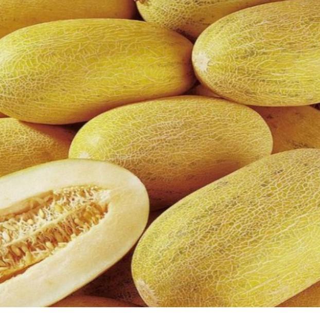 FREE SHIP BỘ 10 gói hạt giống dưa lưới vàng gói 10 hạt TẶNG 1 phân bón