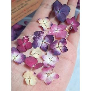 Hộp hoa cẩm tú cầu khô - Dried Hydrangea Flowers dùng trong Resin, đồ handmade thumbnail