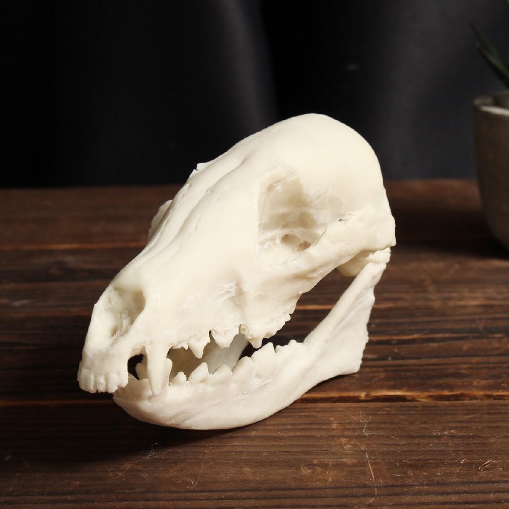 ZJ◎Fox Skull Resin Animal Bone Model Collectibles Crafts Home Decor Christmas Gift