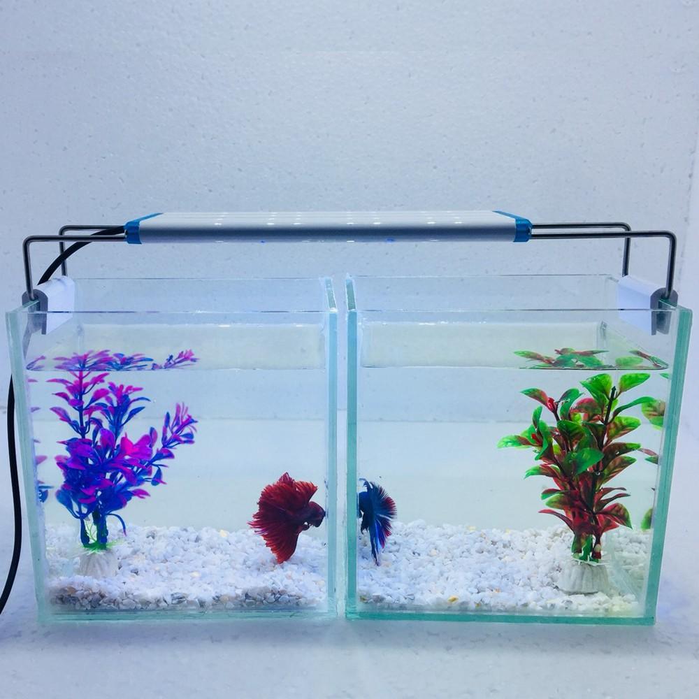 Bể cá mini để bàn combo 2 bể có đèn led