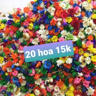 [Giá rẻ] Hoa tuyết nhiệt đới Brazil (snowy, glixia) khô màu đẹp dùng trang trí resin handmade
