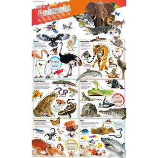 Sách DKfindout Animals Poster thumbnail