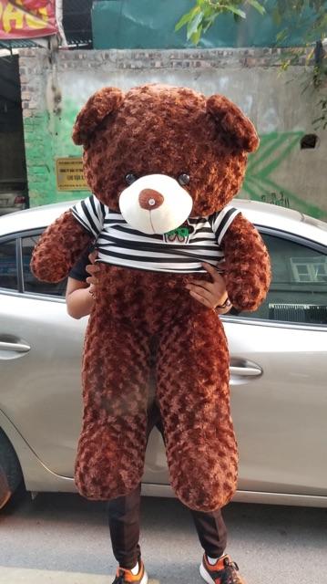 Gấu bông teddy 1m2 khổ cao 1m