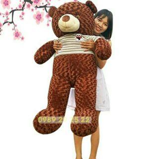 Gấu Teddy khổ 1m4