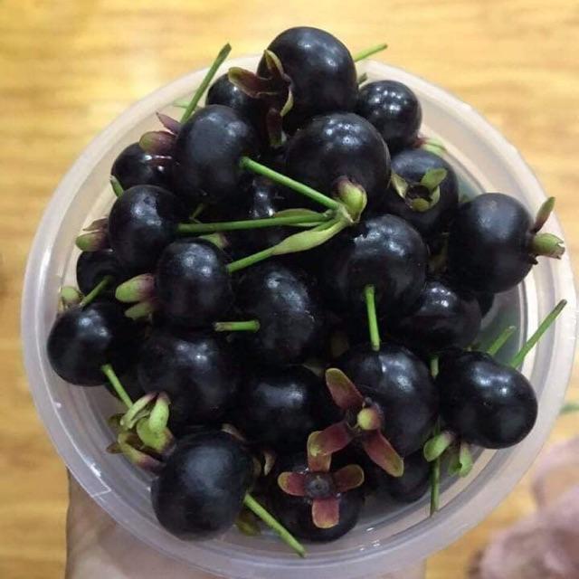 Cherry brazil cây đã ra trái 1 mùa | Shopee Việt Nam