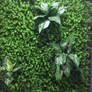 Thảm cỏ trang chí nhà hành lang