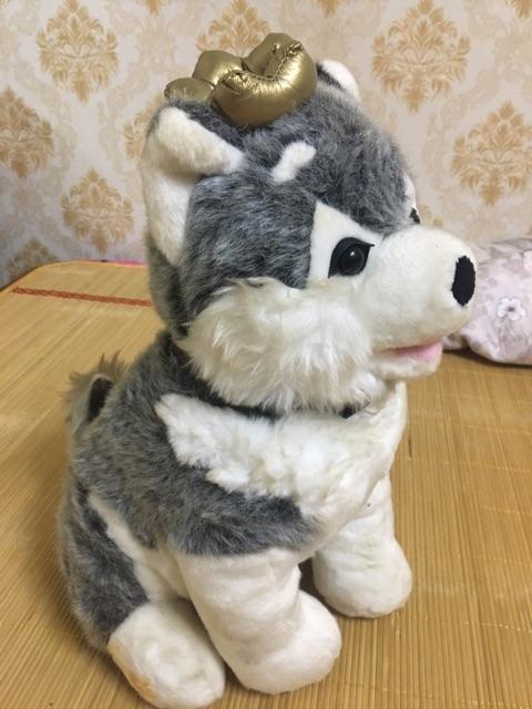 Chó bông alaska( thanh lý nghỉ bán)