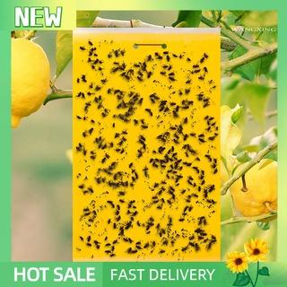 Set 20 keo dính ruồi an toàn cho sân vườn