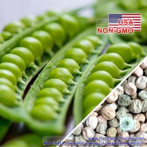 5g Hạt Giống Đậu Hà Lan Leo Chịu Nhiệt - Wando Xuất Sắc (Pisum sativum)