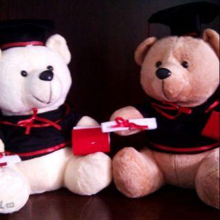 Combo 10 gấu tốt nghiệp siêu cute