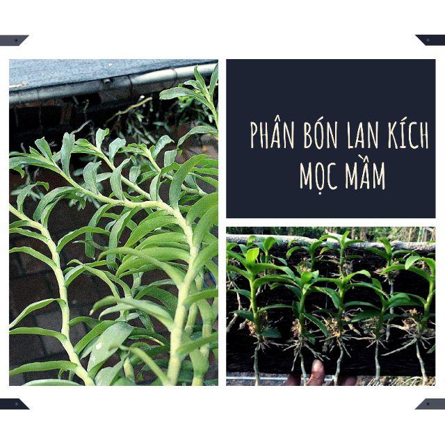 Phân bón lan Rynan210 150g tan chậm cho thời kỳ dưỡng sau ra hoa , kích mầm mới