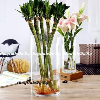 Bình Bông Lọ Hoa Thủy Tinh Trang Trí D15*30, Bình Cắm Hoa Thủy Tinh Trụ, Lọ Hoa Hình Trụ