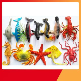 Bộ sinh vật biển – Nhà Sách Trí Tuệ