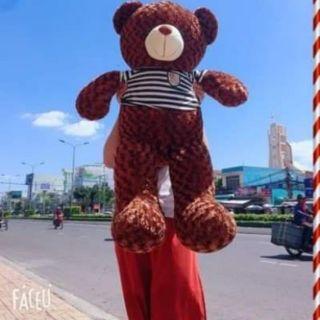 Gấu Teddy 1m màu sôcla
