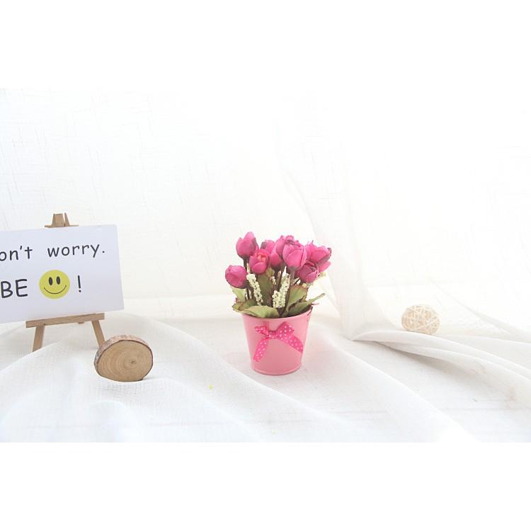 H3 Chậu hoa hồng nhỏ