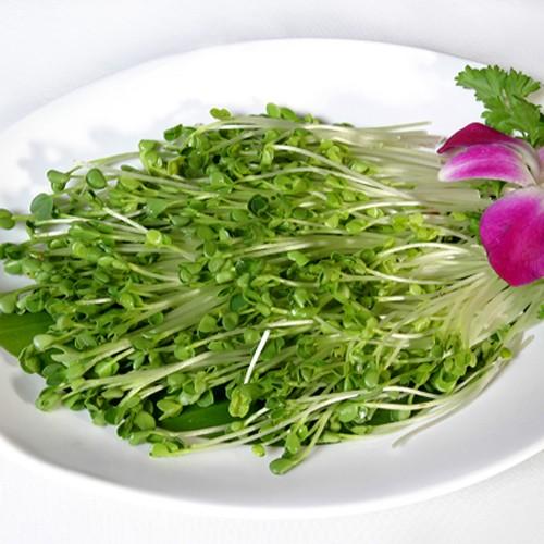 Gói Lớn 01 KG Hạt giống rau mầm Cải ngọt ( Dinh Dưỡng)
