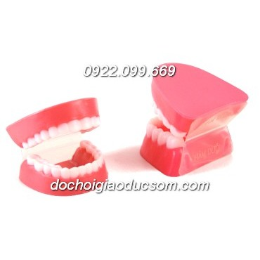 Mô hình hàm răng - dạy bé đánh răng hiệu quả