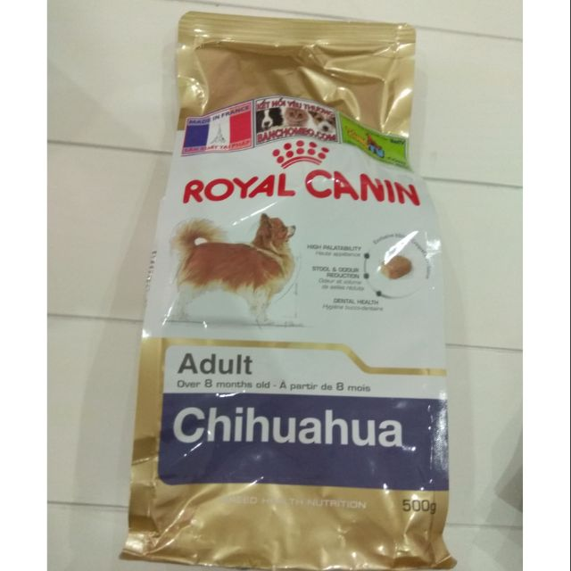 Royal chihuahua adult