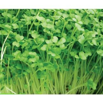 50g Hạt Giống Rau Mầm Cải Bẹ Xanh (Brassica juncea) - 3516579 , 1039985266 , 322_1039985266 , 13000 , 50g-Hat-Giong-Rau-Mam-Cai-Be-Xanh-Brassica-juncea-322_1039985266 , shopee.vn , 50g Hạt Giống Rau Mầm Cải Bẹ Xanh (Brassica juncea)