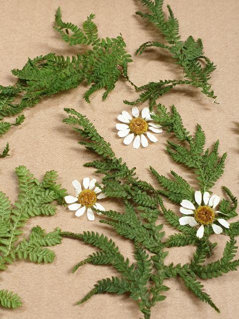 Dương sỉ khô dùng trong Resin, tranh hoa 3D, móng tay, thiệp hoa khô, decor, chụp ảnh ..v...v..