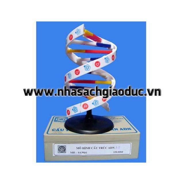 Mô Hình Cấu Trúc ADN