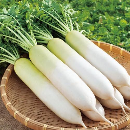 GIÁ GỐC] Hạt giống củ cải trắng củ to mập năng suất - 20 gram | Shopee Việt Nam