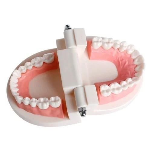 Mô hình răng miệng dùng cho gió dục minh họa tiện dụng chất lượng cao
