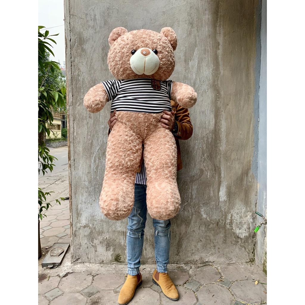 Gấu bông teddy khổ 1m6 cao 1m4