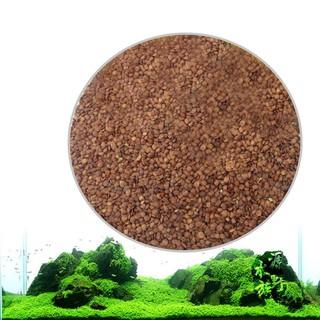 hạt giống thủy sinh thumbnail